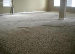 BEFORE---Wrinkled carpet prior to stretching.
